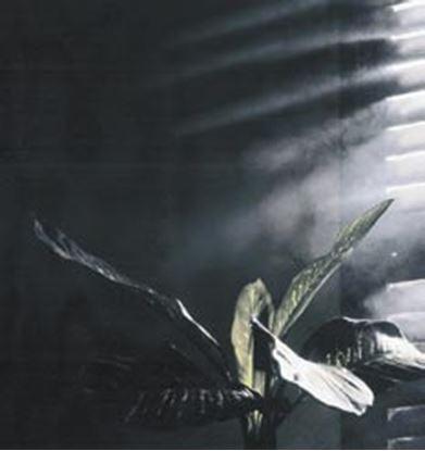 Obrázek Trikové efekty - SMOKY EFFECT Mlha